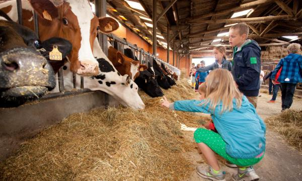 Melkveebedrijf Truyen - Francken